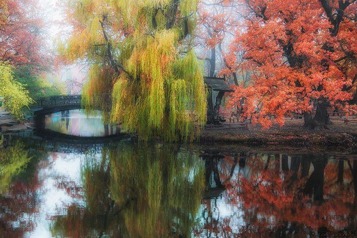 Саратовский городской парк. Автор фото Антон Садомов.