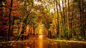 autumn-in-minnesota